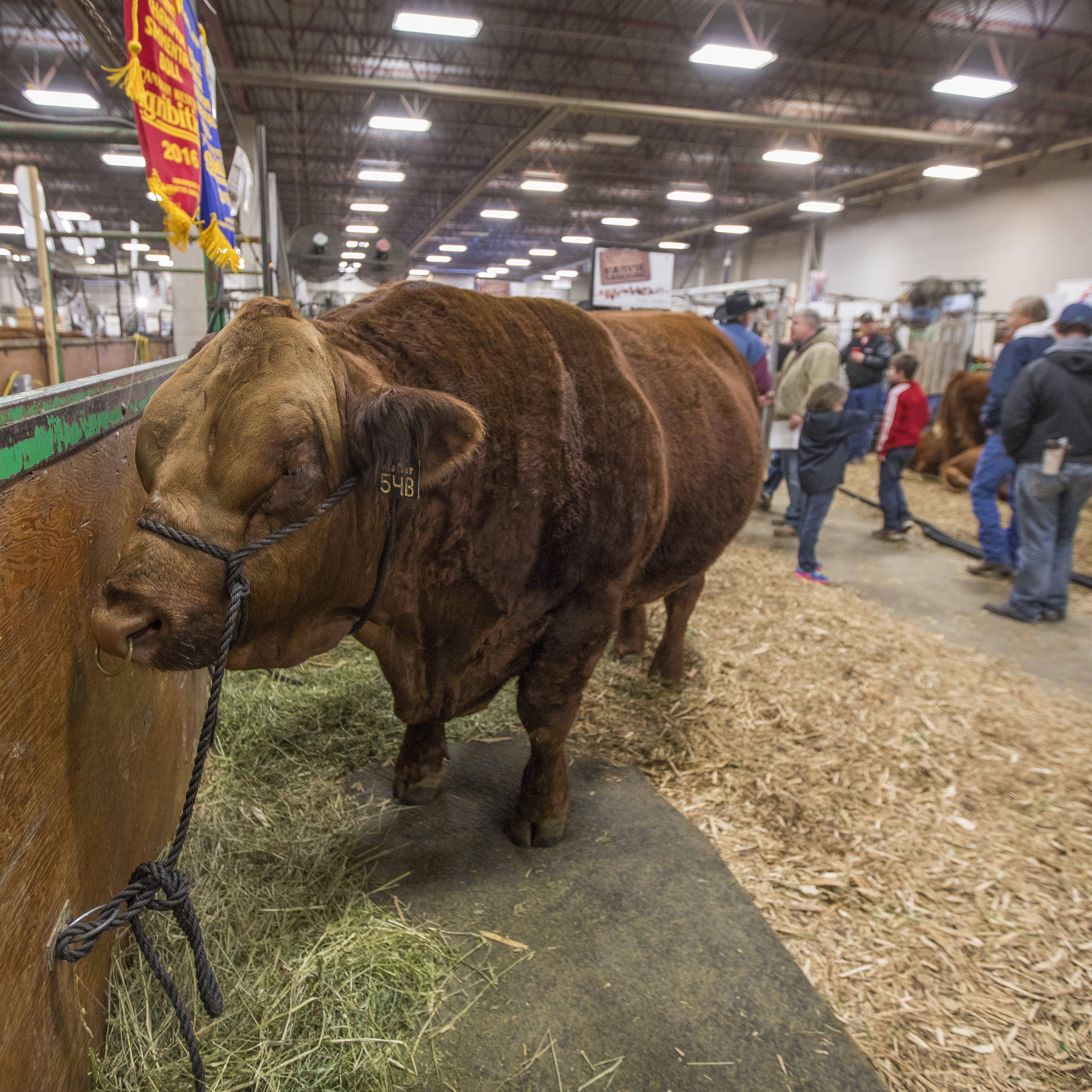 Agribition - Making A Champion
