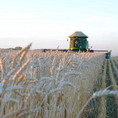 Harvest in Saskatchewan