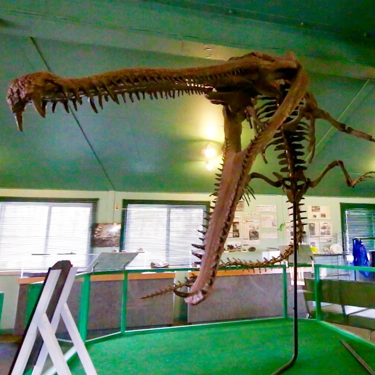 """Big Bert"" Saskatchewan's 92 million-year-old Crocodile!"