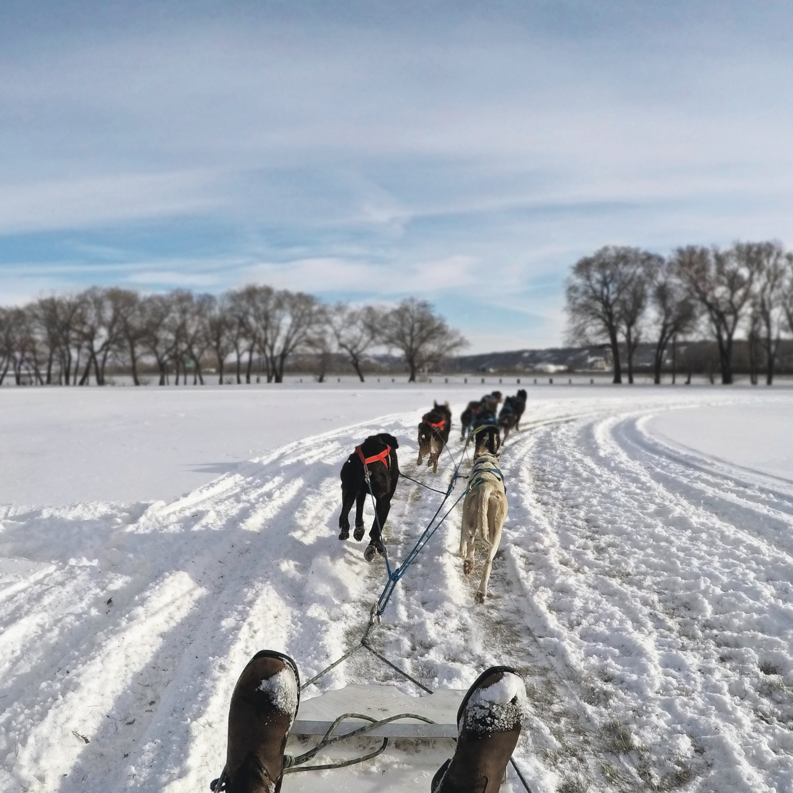 Learning From the Land: A Cree Cultural Experience (with DOGS!)